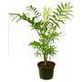 Grande plante